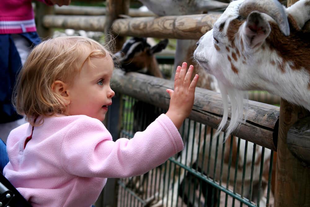 Der Besuch im Zoo ist bereits für die Kleinsten ein absolutes Highlight und das ideale Ausflugsziel für die gesamte Familie