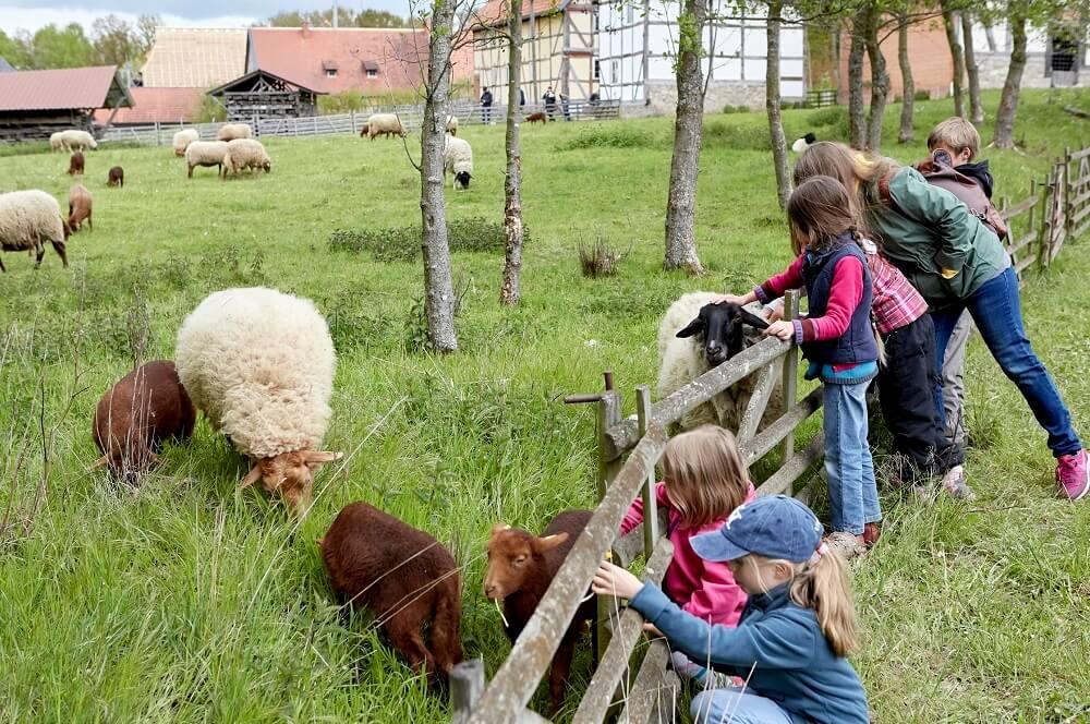 Im Hessenpark können Kinder Tiere bestaunen