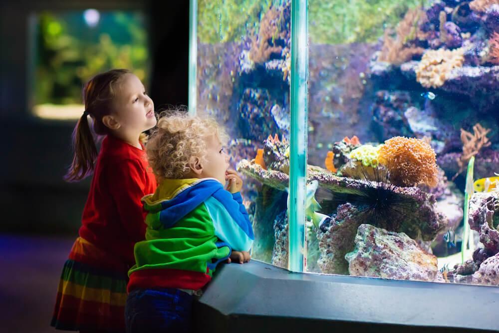 Ob kleine Fische oder große Eisbären - Wasserparks, Tierparks und Aquarien sind für Klein und Groß immer eine Reise wert